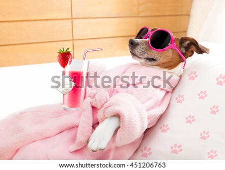 jack russell dog relaxing  and lying, in   spa wellness center ,getting a facial treatment with  moisturizing cream mask and cucumber, drinking a cocktail milkshake smoothie - stock photo