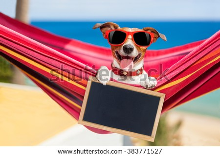 jack russell dog relaxing on a fancy red  hammock  with blank banner, placard or blackboard,  on summer vacation holidays at the beach - stock photo