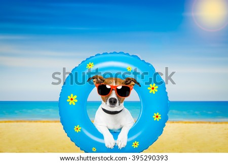 jack russell dog relaxing on air mattress, with sunglasses  on summer vacation holidays at the beach - stock photo