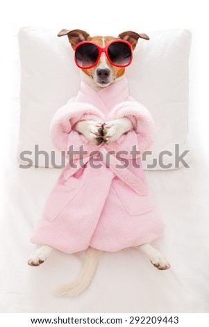 jack russell dog relaxing  with a prayer yoga pose with paws, in a spa wellness center, wearing a  bathrobe and sunglasses - stock photo