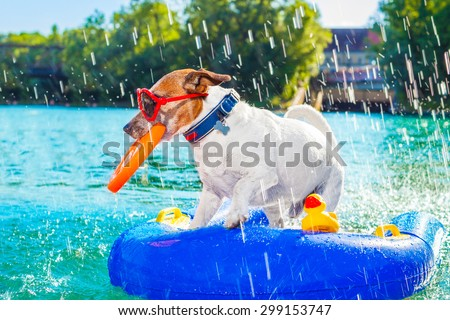 jack russell dog sitting on an inflatable  mattress in water by the  sea, river or lake in summer holiday vacation , splashing fresh water - stock photo
