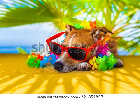 jack russell dog under the shadow of a palm tree relaxing and resting - stock photo