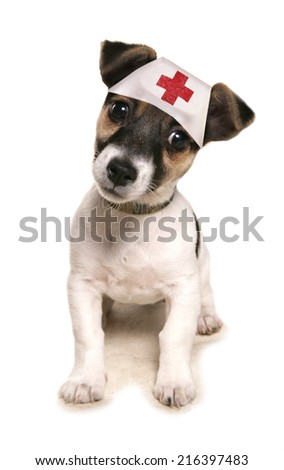 Jack russell dog wearing a medical hat studio cutout - stock photo