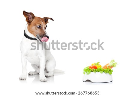 jack russell dog  with  healthy  vegan food bowl, isolated on white background - stock photo