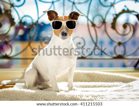 jack russell dog  with sunglasses at balcony  enjoying the sun and hot weather at summer vacation holidays - stock photo