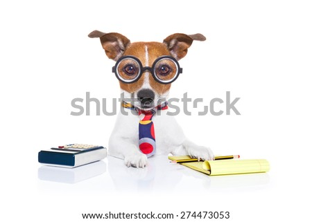 jack russell secretary accountant dog with calculator, a note pad and pencil beside, isolated on white background - stock photo
