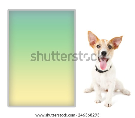 Jack Russell terrier with place for text, isolated on white - stock photo