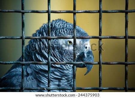 Jaco parrot in a cage. Toned. - stock photo