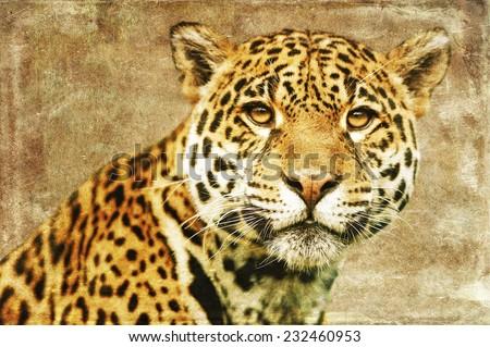 Jaguar (Panthera Onca), isolated on textured grunge background - stock photo