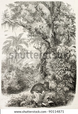 Jaguar resting in the jungle, old illustration. By unidentified author (from the book La Plante by J. Schleiden), published on L'Illustration, Journal Universel, Paris, 1858 - stock photo