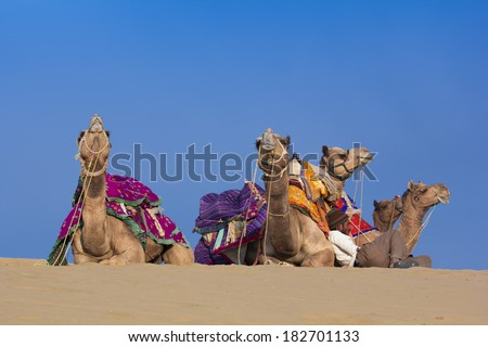 JAISALMER, INDIA - FEBRUARY 26: Thar desert on February 26, 2013 in Jaisalmer, India. Local people and their camel rest on Thar desert in evening time. - stock photo