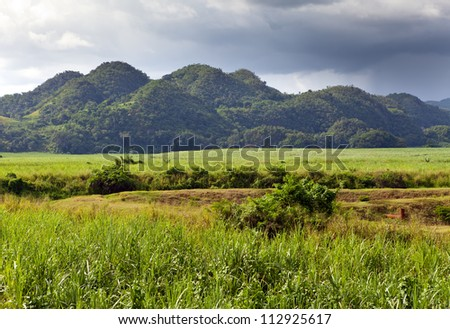 Jamaica. Tropical nature at a foot of the Nassau mountain. - stock photo