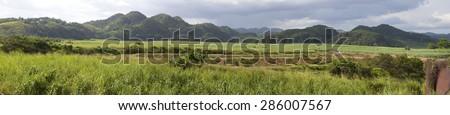 Jamaica. Tropical nature. Nassau Valley - stock photo