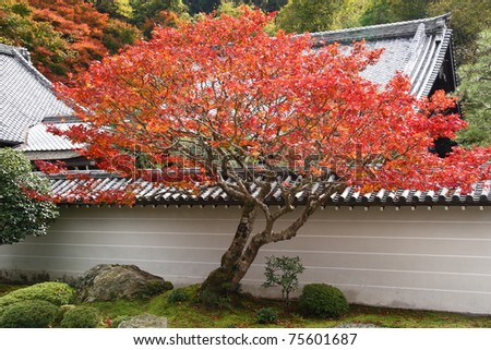 Japan in autumn (red maple trees in temples of Kyoto) - stock photo