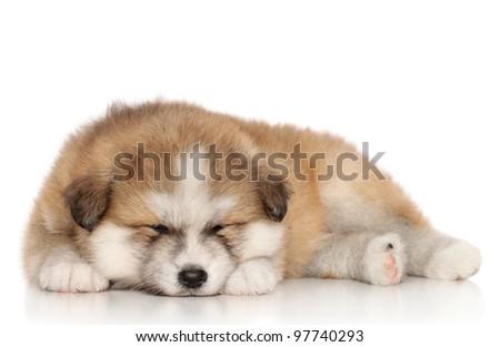Japanese Akita-inu puppy sleep over white background - stock photo