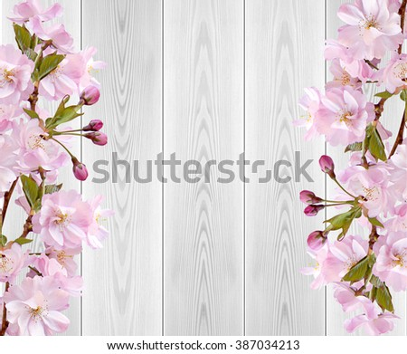 japanese cherry blossoms on white wooden table - stock photo