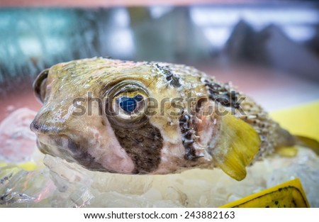 Pufferfish Stock Photos Images Pictures Shutterstock