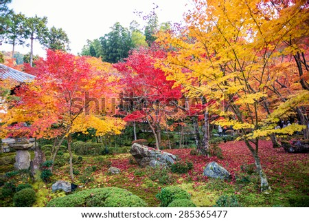 Japanese garden during falling season - stock photo