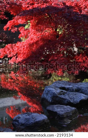 Japanese garden with bright red maple reflected on a pond. - stock photo