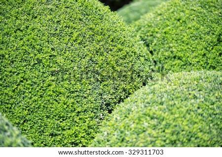 Japanese Gardens in Cowra - stock photo