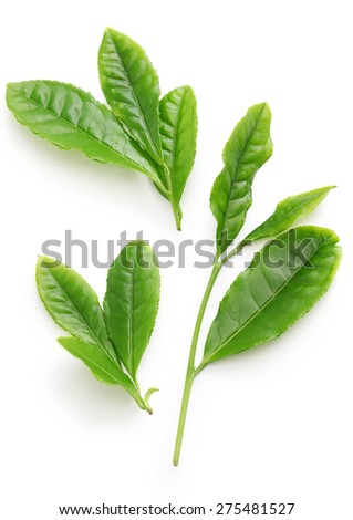 Japanese green tea first flush leaves isolated on white background - stock photo