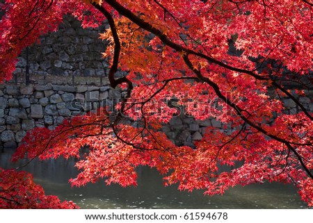 Japanese maple above a pond in Akashi castle, Kobe, Japan - stock photo