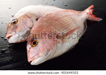 japanese red sea bream - stock photo