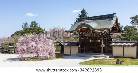 Japanese Sakura tree and Traditional Gate of Daikakuji Temple. Beautiful weeping Cherry Blossom tree with new pink buds in the spring Hanami Festival, Arashiyama, Kyoto, Japan - stock photo