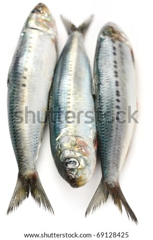 japanese sardine, japanese pilchard - stock photo