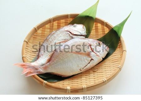 Japanese sea bream - stock photo