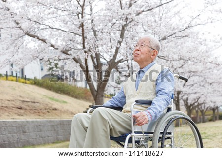 Japanese senior man sitting on a wheelchair background of cherry - stock photo