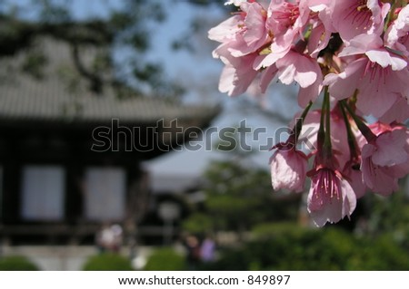 Japanese Temple and Cherry Blossom, Kyoto, Japan - stock photo