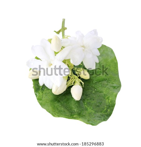 Jasmine flower with leaves isolated on background with clipping path. - stock photo
