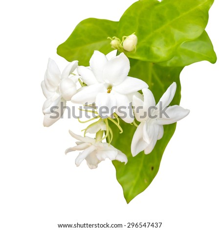 Jasmine isolate on white background with clipping path. - stock photo