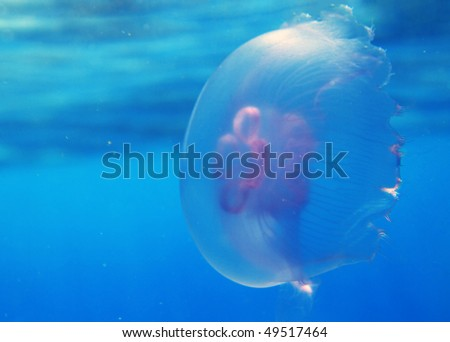 Jelly fish in Red Sea - stock photo