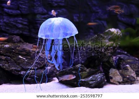 Jellyfish - stock photo