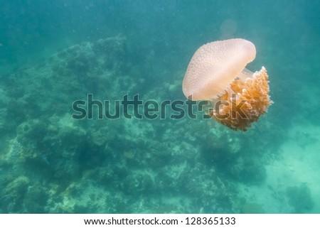 Jellyfish at Lipe island in Thailand - stock photo