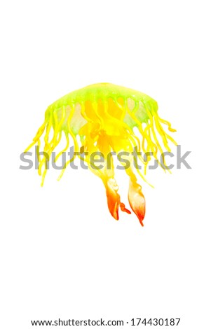 Jellyfish in different collors isolated over white - stock photo