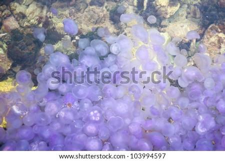 Jellyfish mass - stock photo