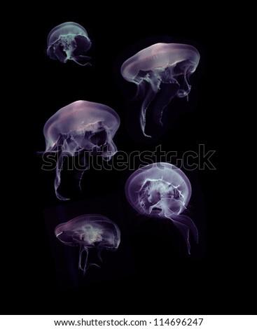 jellyfish on black background - stock photo