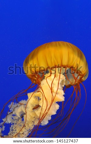 Jellyfish Portrait - stock photo