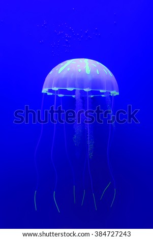 jellyfish swimming in blue background - stock photo
