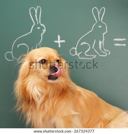 Jesting puzzle with funny dog studying mathematics - stock photo