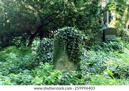 Jewish cemetery: tombstone with green ivy - stock photo
