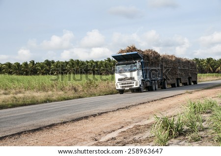 JOAO PESSOA, PB, BRAZIL - OCT 19, 2008: Trucks for the transport of sugar cane for the production of ethanol on October 19 2008, in Joao Pessoa, Brazil - stock photo