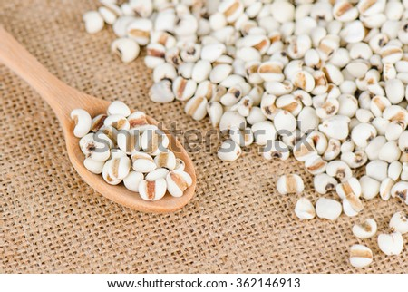 Job's tears with wooden spoon, Millet grains, Organic. - stock photo