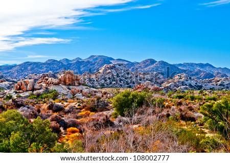 Joshua Tree National Park - California - stock photo