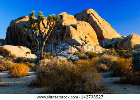 joshua tree national park california - stock photo