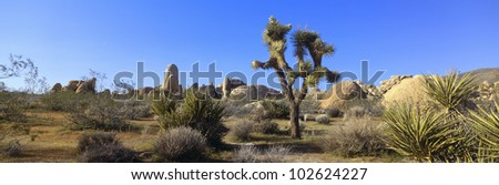 Joshua Tree National Park, Spring, California - stock photo