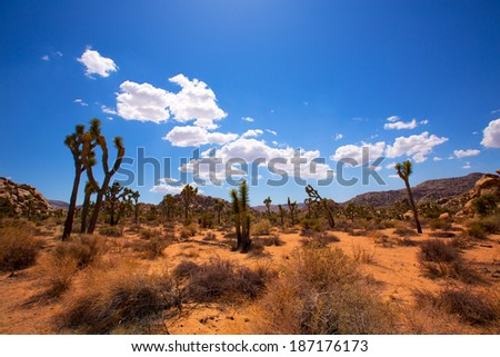 Joshua Tree National Park Yucca Valley in Mohave desert California USA - stock photo